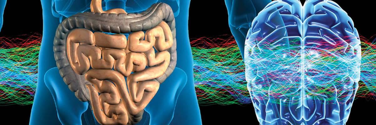 Healthy Gut (Spleen/Stomach) For Immunity, Autoimmune